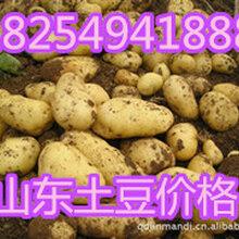 2018年山東今日荷蘭十五土豆價格與全國荷蘭十五土豆產地批發平均價格圖片
