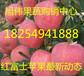 山东苹果产地红富士苹果价格