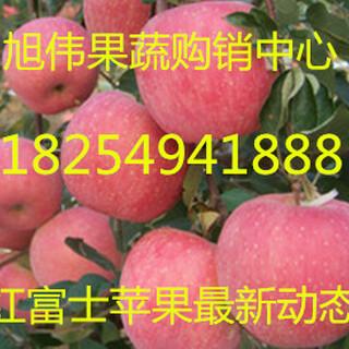 山东冷库红富士苹果产地价格图片1