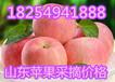山东冷库红富士苹果出库价格