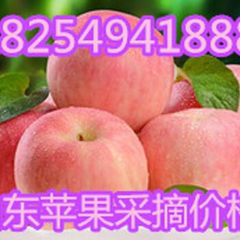 山东苹果批发价格