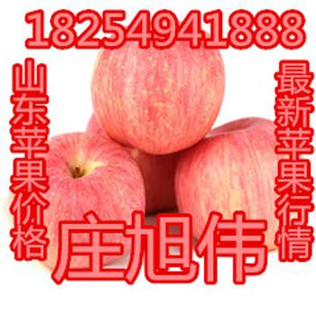 山东红富士苹果