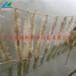供应生物膜净水栅栏