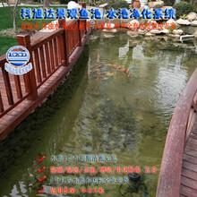 锦鲤鱼池过滤系统浙江丽水景观鱼池过滤水质一次性解决方案