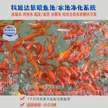 锦鲤鱼池过滤系统浙江宁波景观鱼池过滤器水质全套解决方案