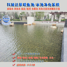 室外鱼池过滤系统浙江嘉兴景观鱼池水过滤浓绿水解决方案厂家直销