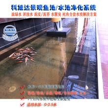 养鱼用的过滤器浙江绍兴室外鱼池水处理水绿一次性解决方案