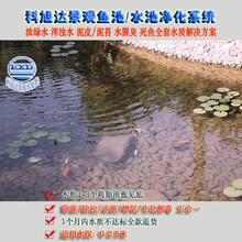 水池水循环系统浙江杭州鱼池水净化器水绿一次性解决方案厂家直销