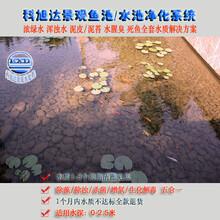 锦鲤鱼池过滤系统浙江绍兴景观鱼池净化器365天水清见底