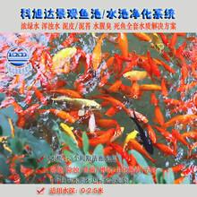 鱼池过滤系统设计图浙江台州景观鱼池水净化3天清澈见底厂家直销