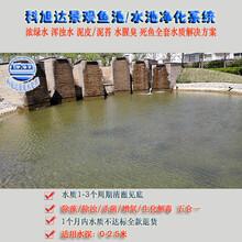 庭院鱼池过滤系统浙江湖州景观鱼池水过滤浓绿水解决方案厂家直销
