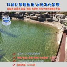 花园鱼池水处理浙江丽水景观水池过滤水绿一次性解决方案厂家直销