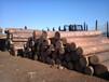 优质柳桉木南京专业回收二手建筑废木材模板木料南京哪里回收建筑木方