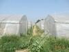 中國河南最大的蝎子養殖基地最新蝎子養殖技術