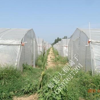 中国河南最大的蝎子养殖基地最新蝎子养殖技术