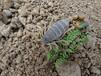 為何淘汰溫室恒溫蝎子養殖方法
