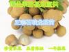 龙眼广东惠东石峡龙眼苗(80公分-1米)龙眼嫁接苗销售