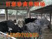 陕西鸵鸟养殖场地址鸵鸟苗价格咨询百泰珍禽