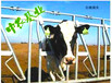中農基業牛頸枷熱鍍鋅制作價格透明