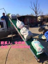 袋装大米水稻装车机肥料码垛传送带玉米皮带运输机图片