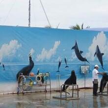 海洋动物杂技表演百鸟展租售展览专业主题动物展