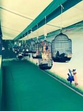 百鸟展出租鹦鹉表演马戏团表演海狮杂技表演租售