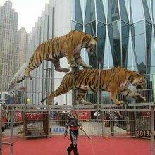 大型马戏团表演动物杂技表演团队全国低价巡演