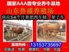 贵州鲁西黄牛价格