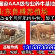 养殖肉牛的前景如何