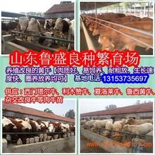 肉牛养殖场怎么建