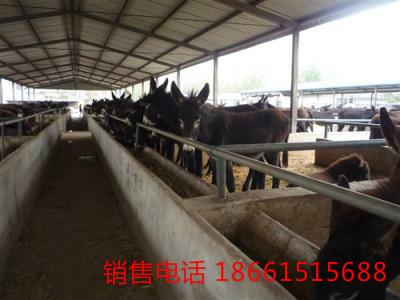 蚌埠市哪里卖驴