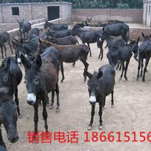 肉驴价格图片