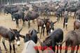 安庆市哪里出售毛驴