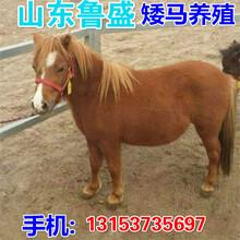 养马网-养马场,养马基地,哪里有卖马的,蒙古马,伊犁马养殖场图片