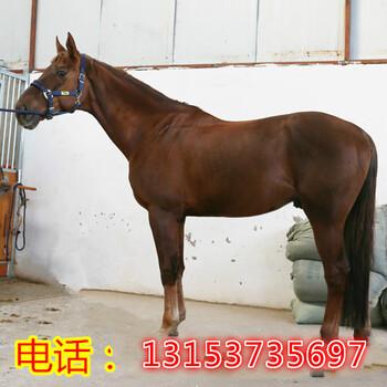 北京骑乘马多少钱
