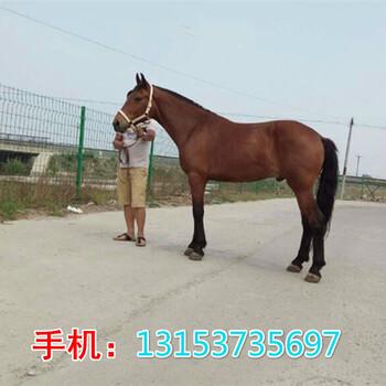 镇江市骑乘马多少钱