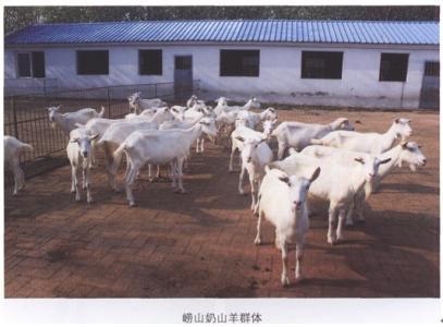 安庆市求购奶山羊