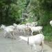 江西省关中奶山羊多少钱