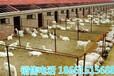 巴彦淖尔市奶山羊价格查询
