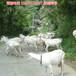 邯郸市购买奶山羊