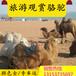 呼伦贝尔骆驼养殖场
