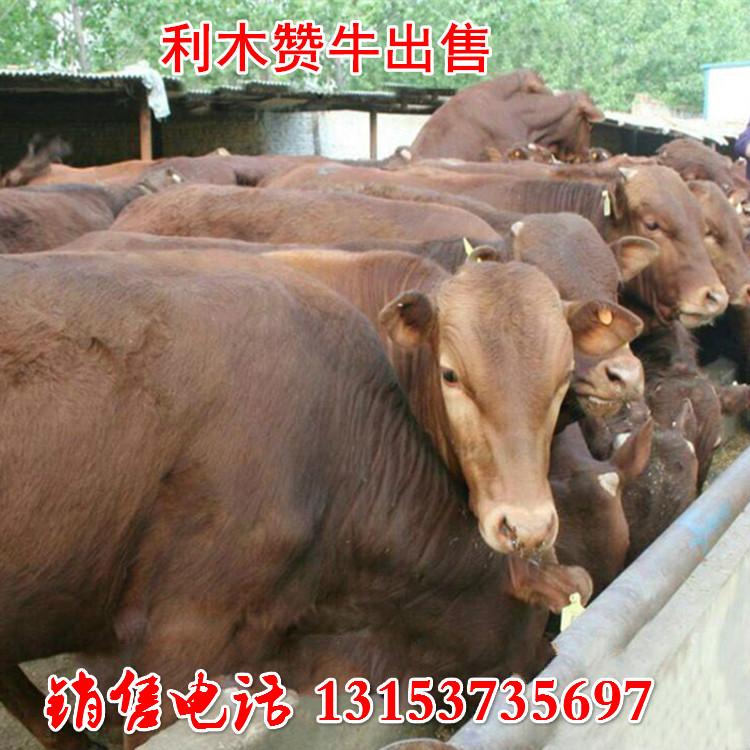 利木赞牛价格表