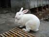 丽水市肉兔养殖基地
