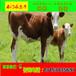小红牛价钱