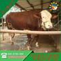 黄冈市大型养牛场联系电话图片