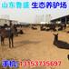 和平区养驴基地