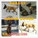 沧州市哪儿出售马犬