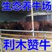 齊齊哈爾市哪里賣肉食小黃牛
