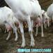 青海海南藏族自治州山羊的养殖
