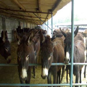 葫芦岛市大的养驴场在哪里